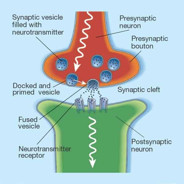 synaptic nerve cells communication picture