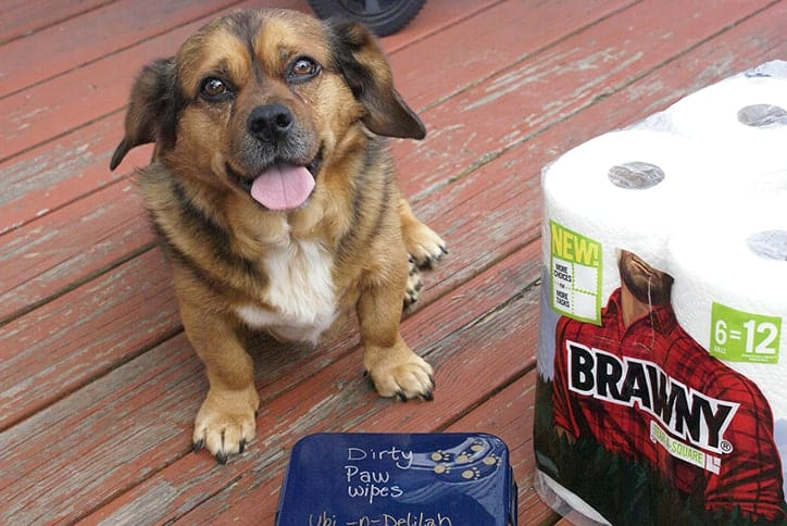 Pet Wipes Made Easy with Brawny Tear a Square Paper Towels #CollectiveBias #TearASquare
